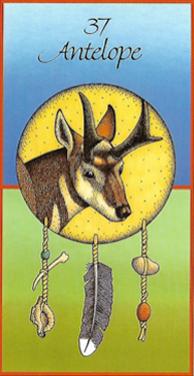 37antelope