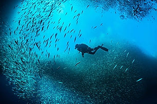 Diving Activities and Discovery Snorkelling