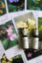 fiori-di-bach.jpg