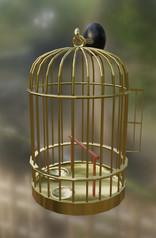 bird cage.jpg