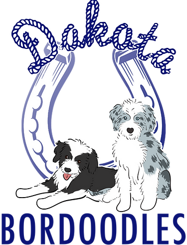 Bordoodle Puppies For Sale Near Me | Dakota Bordoodles