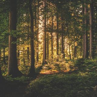 Coopératives forestières et durabilité : un état des lieux