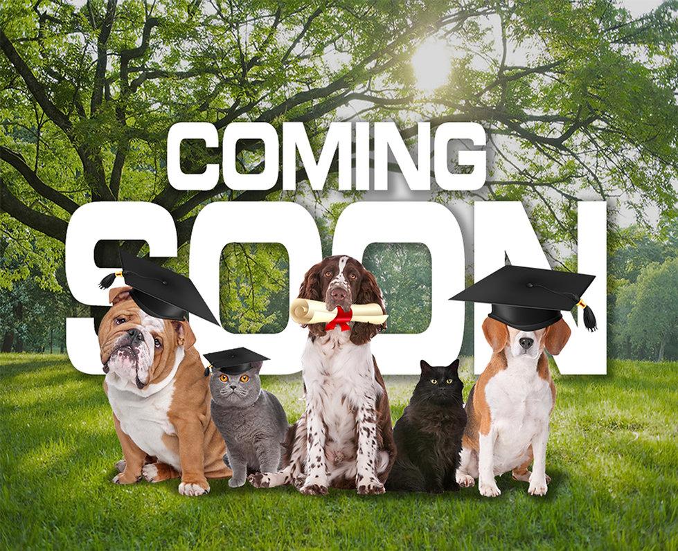 FFF - Coming soon copy.jpg