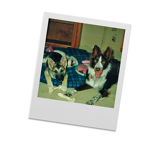 FFF - Polaroid - Picts - 6.png
