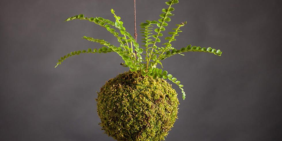 Plant Workshop: Kokedama