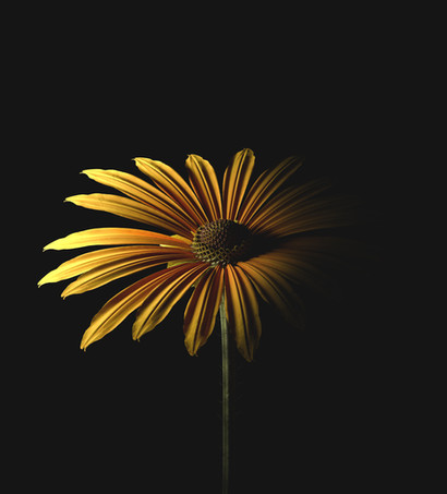 You're my sunflower.