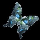 Watercolor Butterfly 11