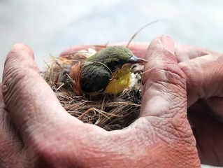 Everything You Ever Wanted to Know About Removing Birds Nests