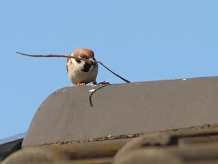 Fire Hazards of Bird Nesting Materials