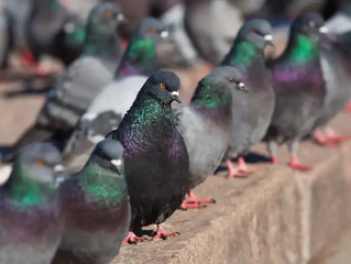 Parasites That Live in Bird Nesting Materials