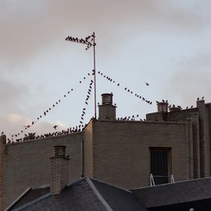 Importance of Bird Control Around Commercial Buildings