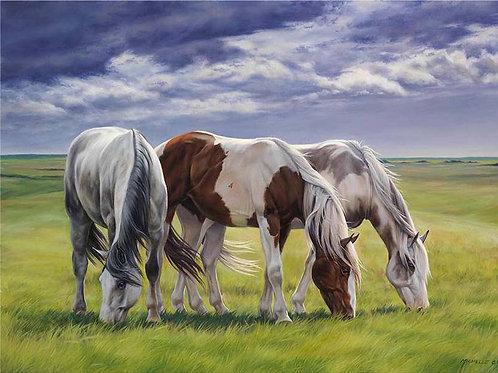 """Картина по номерам """"Лошади на лугу"""" 40х50 см"""