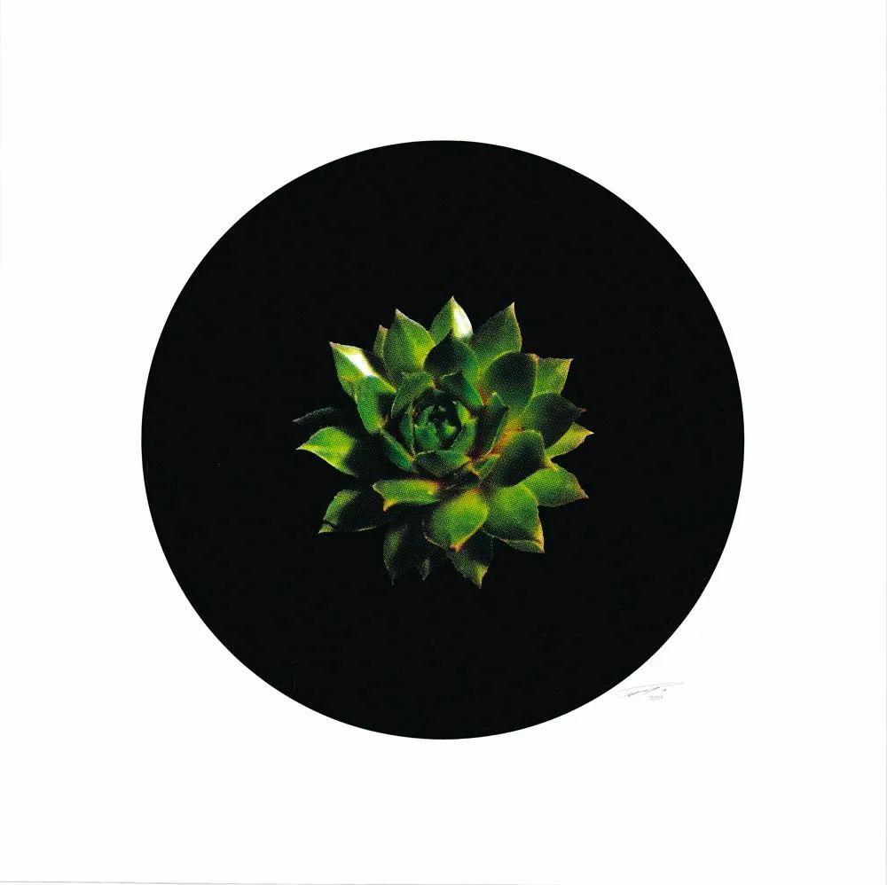 Succulent1 1.jpg