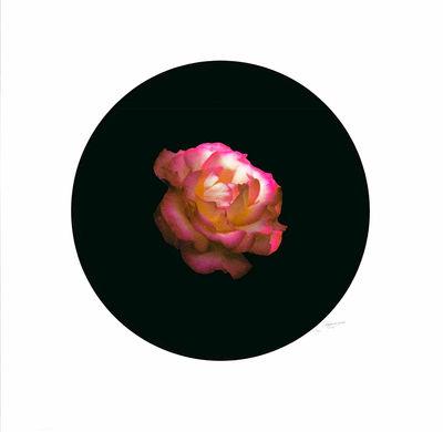 Rose1 1.jpg