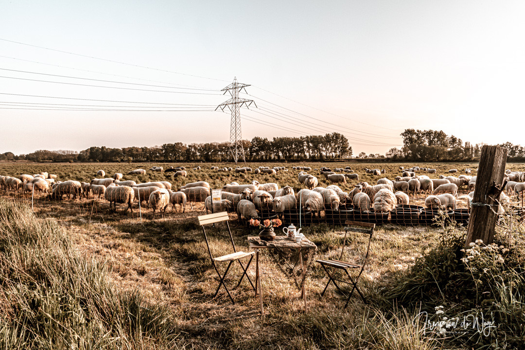Picnic with the sheep