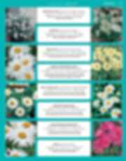 Perennials-page-026.jpg