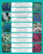 Perennials-page-010.jpg