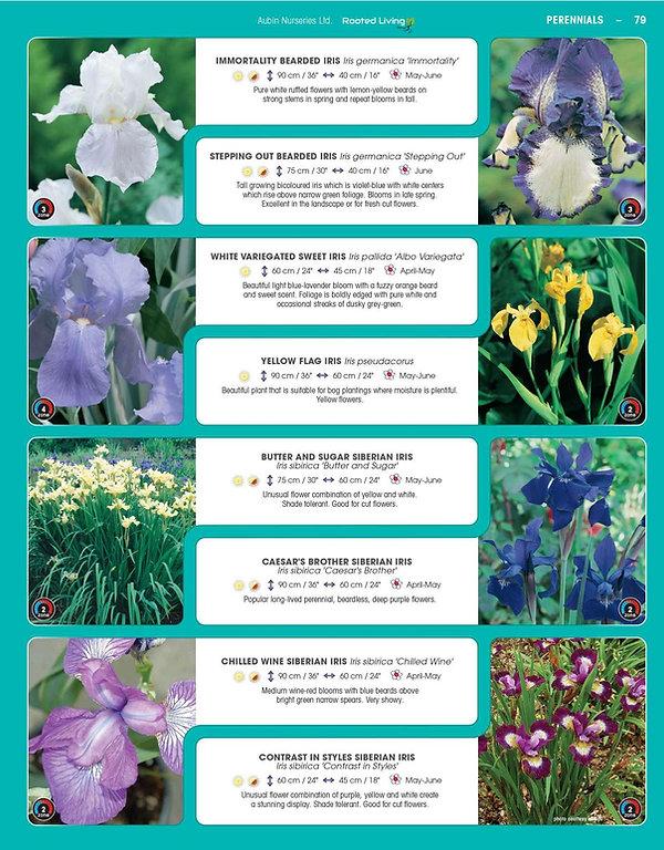 Perennials-page-024.jpg