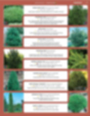 Evergreens-page-005.jpg