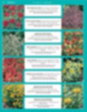 Perennials-page-015.jpg