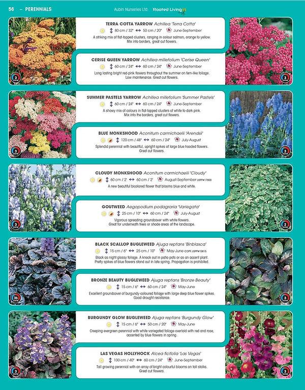 Perennials-page-001.jpg