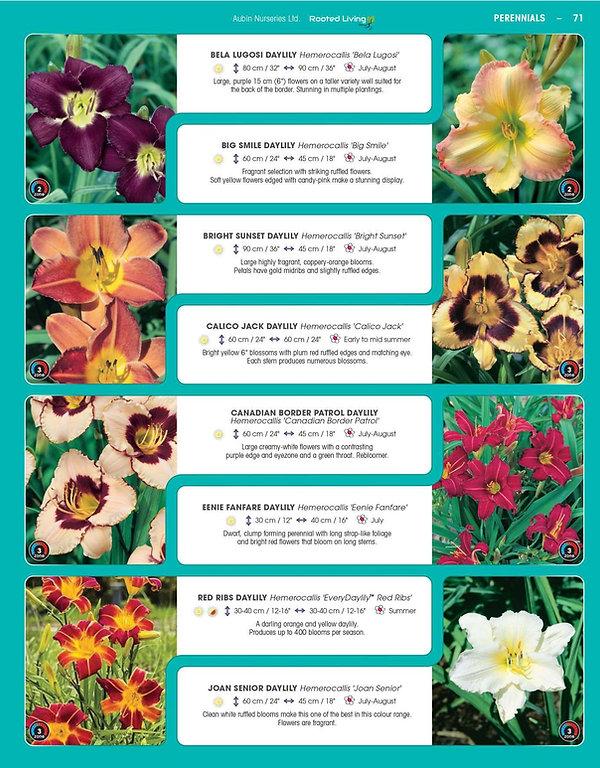 Perennials-page-016.jpg