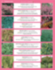 Ornamental Shrubs-page-013.jpg