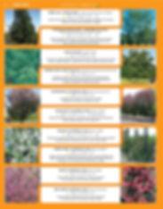 Shade Trees-page-004.jpg