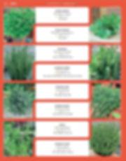 Herbs-page-003.jpg