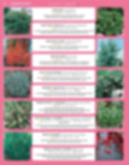 Ornamental Shrubs-page-001.jpg