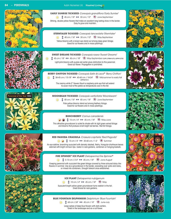 Perennials-page-009.jpg