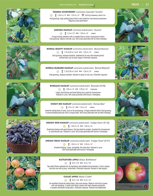 Fruits-page-003.jpg
