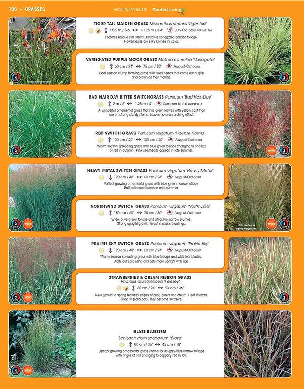 Grasses-page-003.jpg