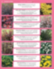 Ornamental Shrubs-page-011.jpg
