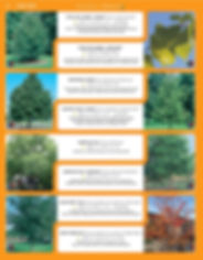 Shade Trees-page-010.jpg