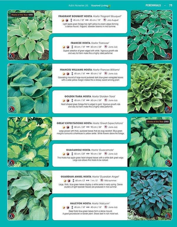 Perennials-page-020.jpg