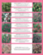Ornamental Shrubs-page-022.jpg