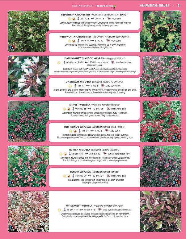 Ornamental Shrubs-page-022.jpg