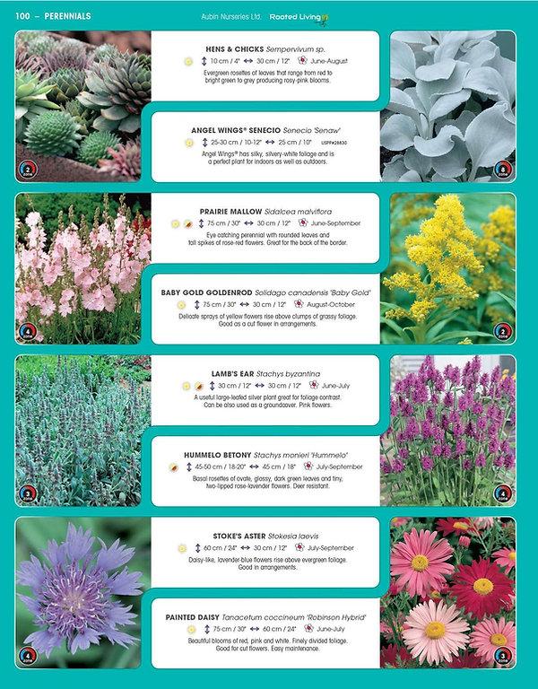 Perennials-page-045.jpg