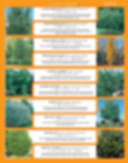 Shade Trees-page-003.jpg