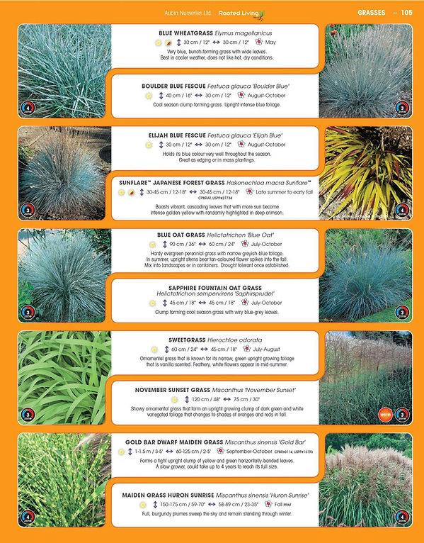 Grasses-page-002.jpg
