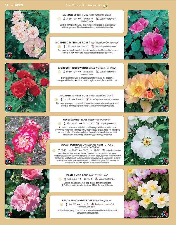 Roses-page-003.jpg