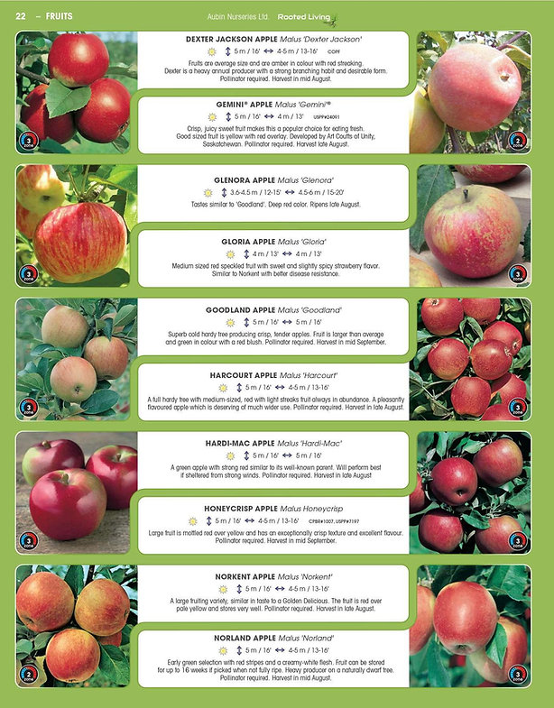 Fruits-page-004.jpg