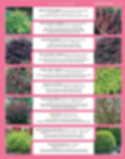 Ornamental Shrubs-page-002.jpg