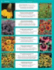 Perennials-page-039.jpg