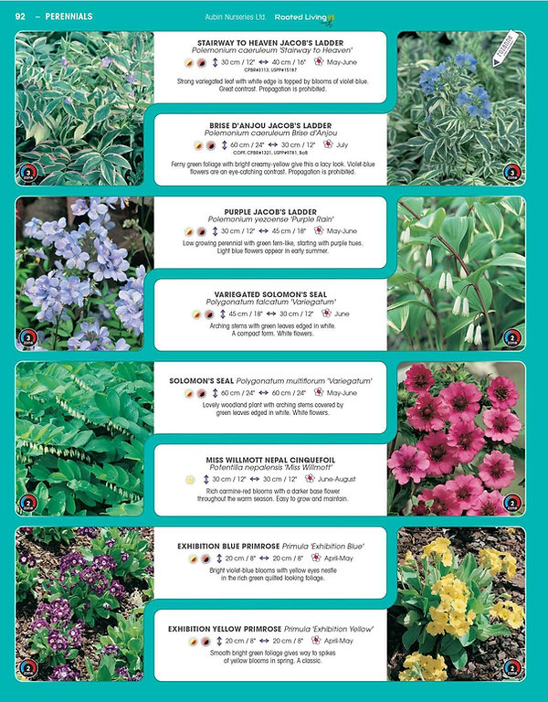 Perennials-page-037.jpg