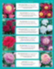 Perennials-page-032.jpg