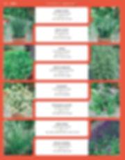Herbs-page-001.jpg
