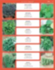 Herbs-page-002.jpg