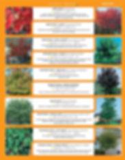 Shade Trees-page-001.jpg